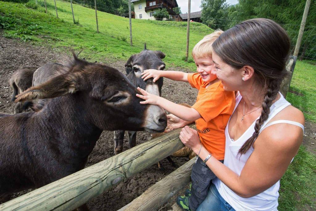 Wildpark Assling Sommer Osttirol Strasserwirt