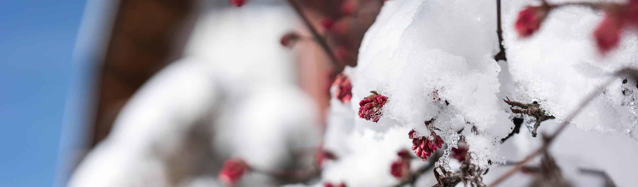 strasserwirt-winterpreise
