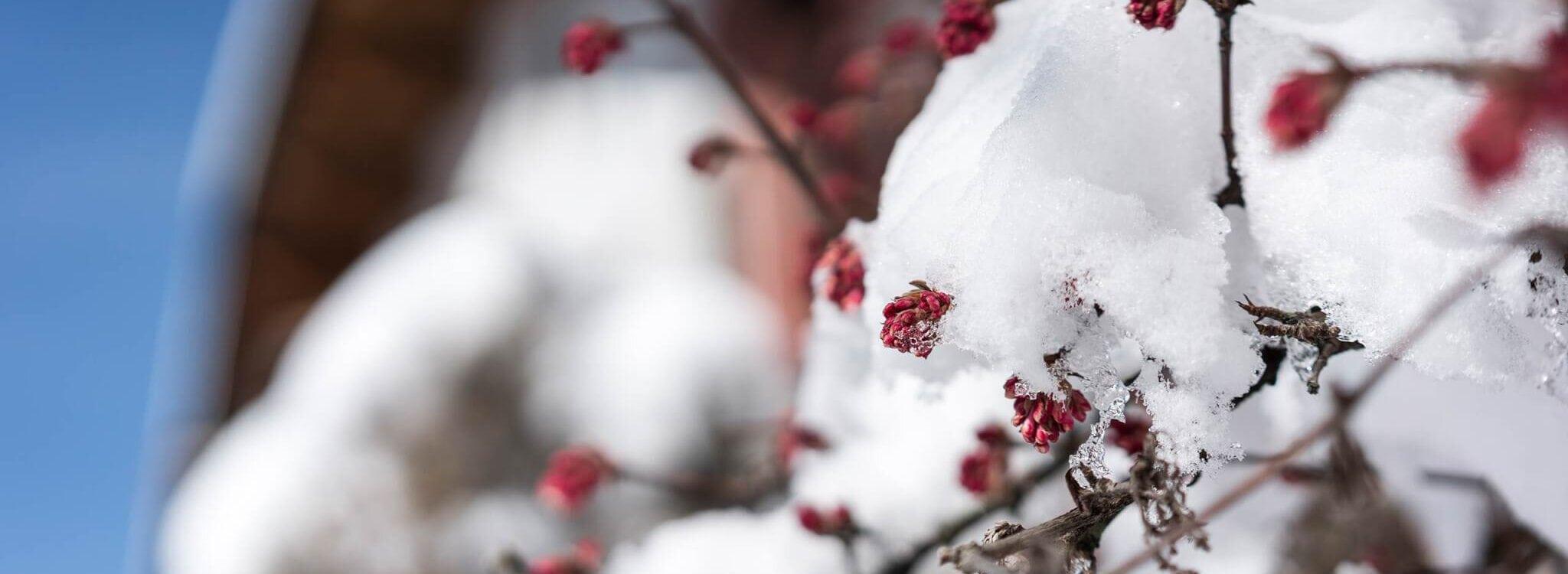strasserwirt winterpreise
